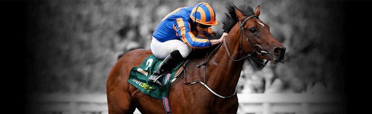 bet365 Price Promise Horse Racing Offer