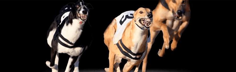 bet365 Sky Dogs 2/1 Offer