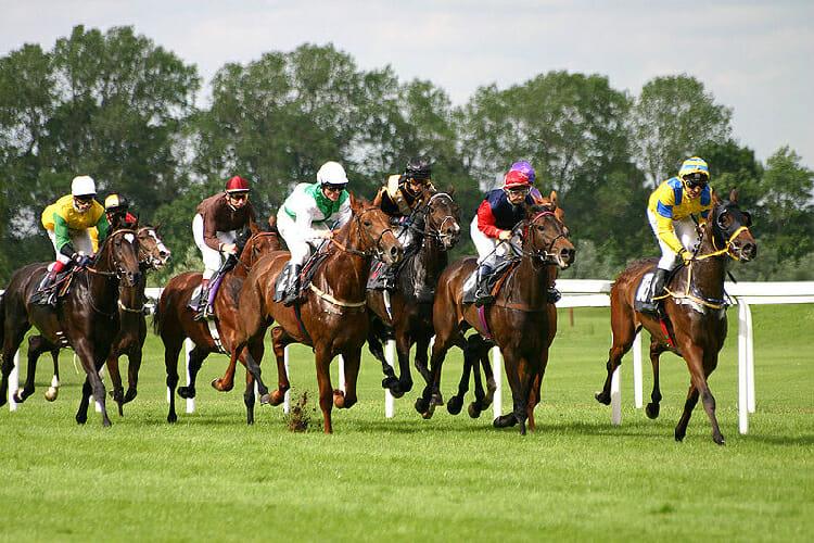 Horses in line
