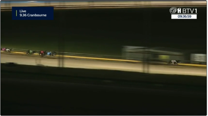 greyhound race on William Hill Betting TV
