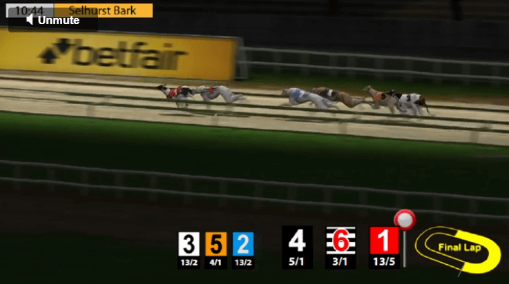 virtual greyhound race underway with statistics and odds at bottom of the screen