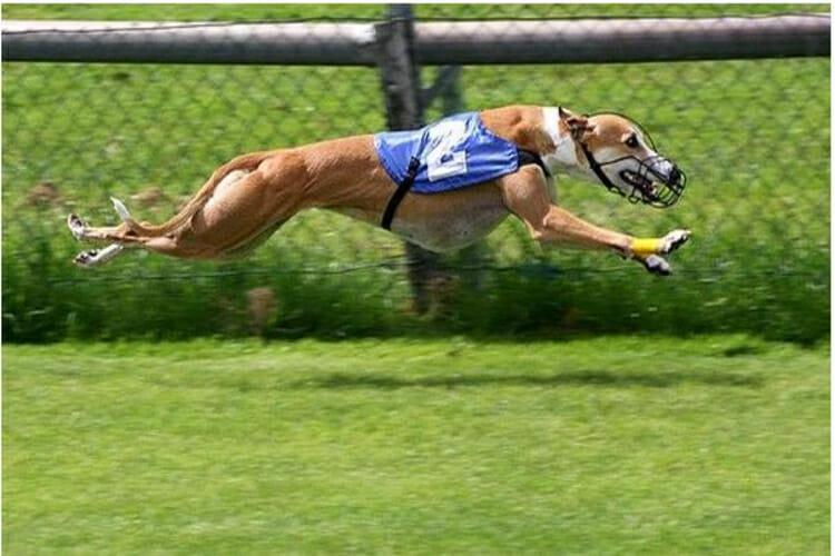 Harolds cross dog racing betting world cup top scorers betting odds