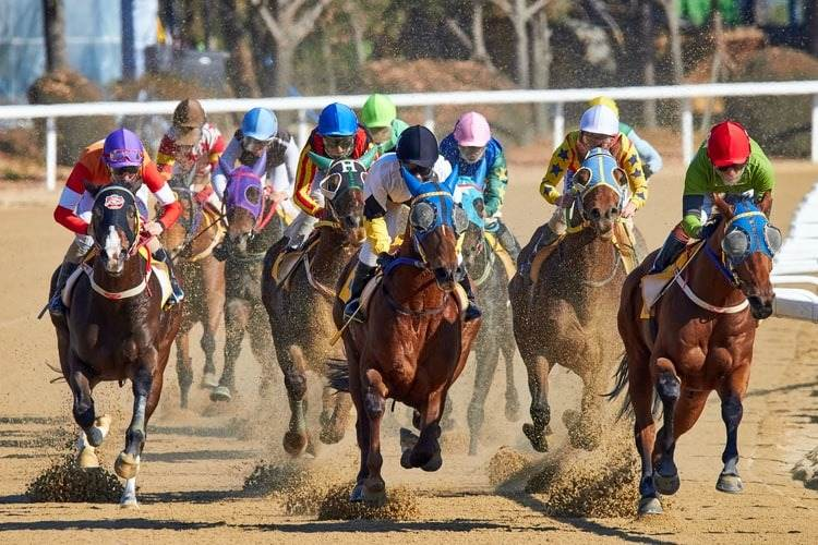 picture of horse racing in South Korea