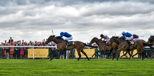 horses running at the ascot gold cup