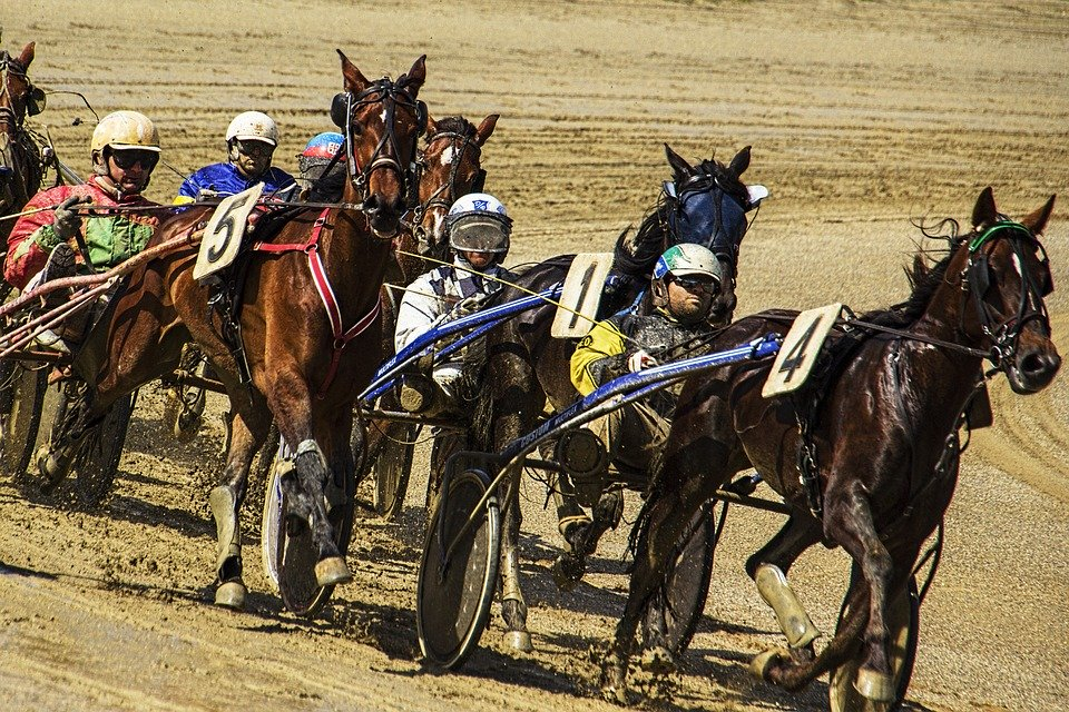 Harness racing betting terms in golfing how does nhl betting workers