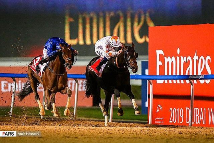 Can you bet on horse racing in dubai mlb betting lines explanation of the bill